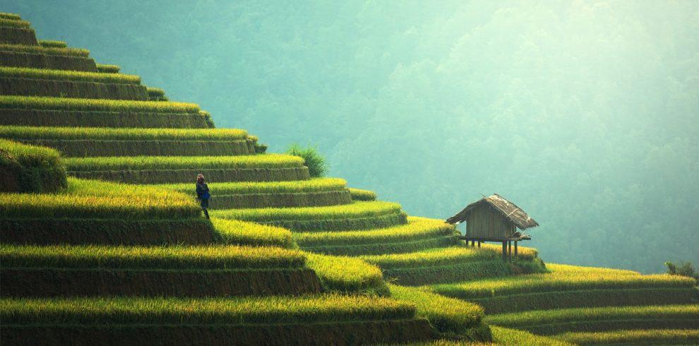 Bali rice field hills